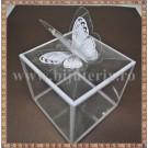 Cutie acetofan - margine alba cu fluturas 4x4x5,5cm