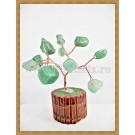 Copacel Feng shui - Jad verde - ghiveci mic