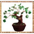 Copacel Feng shui - Jad verde - ghiveci